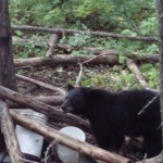 Bear Hunting in Ontario