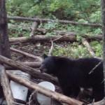 Bear Hunting in Ontario