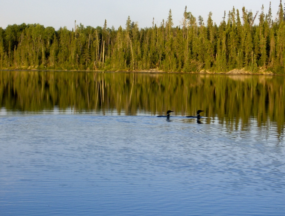 Snakeweed lake woman river camp for Portage lakes fishing